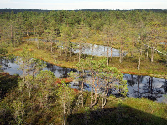 Blick übers Naturschutzgebiet
