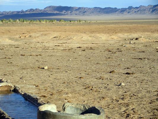 Wie abgetrennt wachsen auf der einen Seite Sträucher und daneben ist Sandwüste