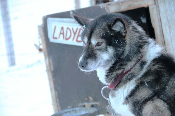 Ontdek Spitsbergen / photocredits: Bjorn van Teeffelen