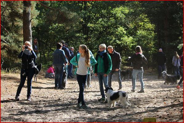 Schapendoes Spaziergang am Birkenhof 2018