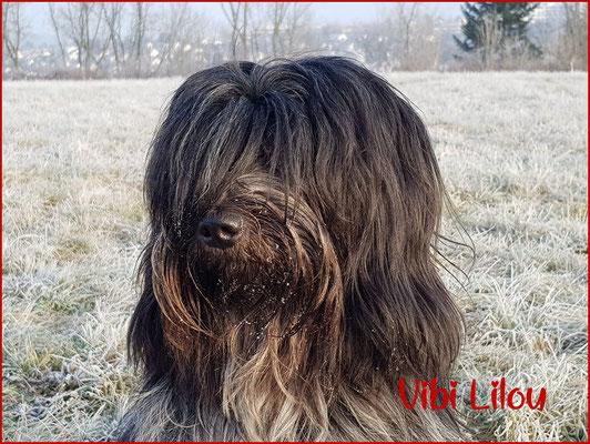Kopfstudie Libertin's Vibi Lilou