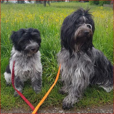Hunde aus dem V- Wurf bei den Libertin's