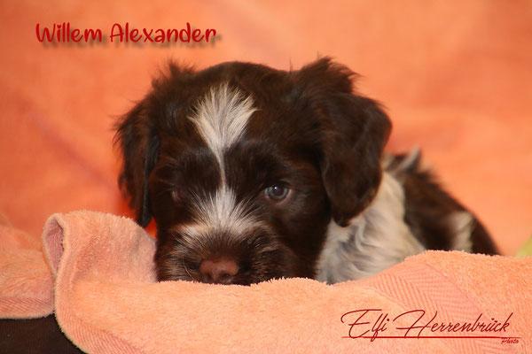 Willem Alexander in Oranje!