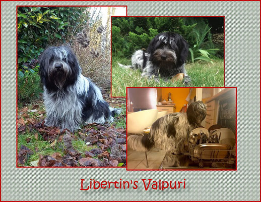 Bilder von Libertin's Valpuri genannt Vappu