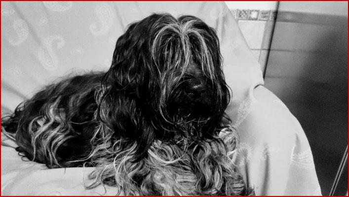 Einer ihrer Lieblingsplätze: Das Hundesofa