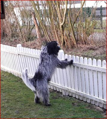 Libertin's Violotta schaut mal über den Zaun!