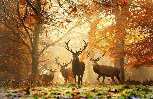 Séjour chasse