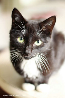 Büromieze Feli - Kult-Kitty mit eigenem Fanclub