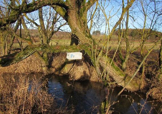 Wasseramsel-Nistkasten an einem Baum