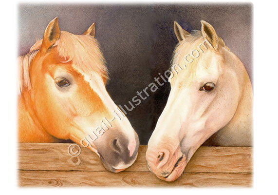 Ponies im Stall
