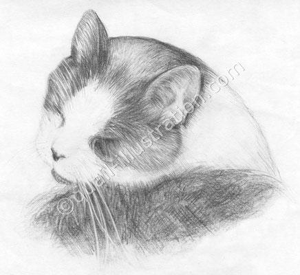 Katze Bleistift