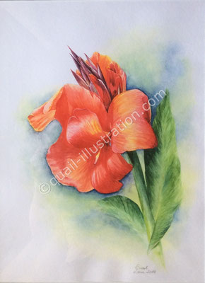 Canna in Aquarell