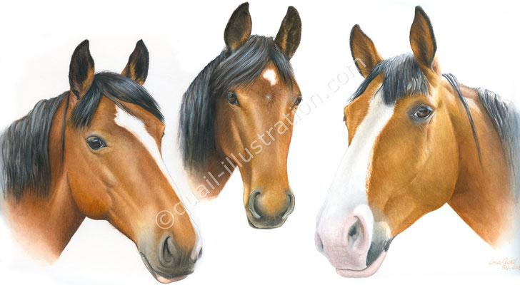 Portrait von 3 Pferde in Gouache