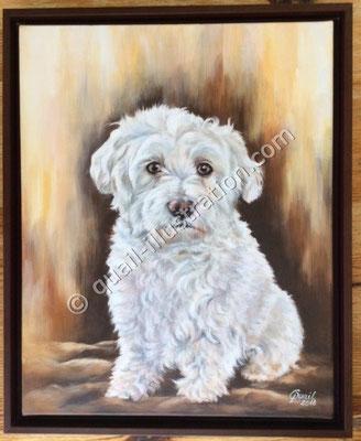 Hunde Portrait in Acryl