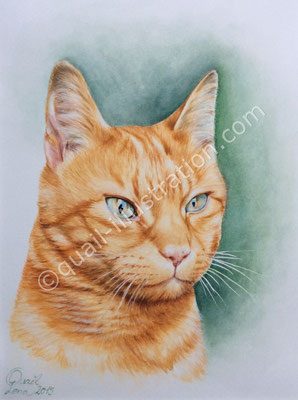 Katze Portrait