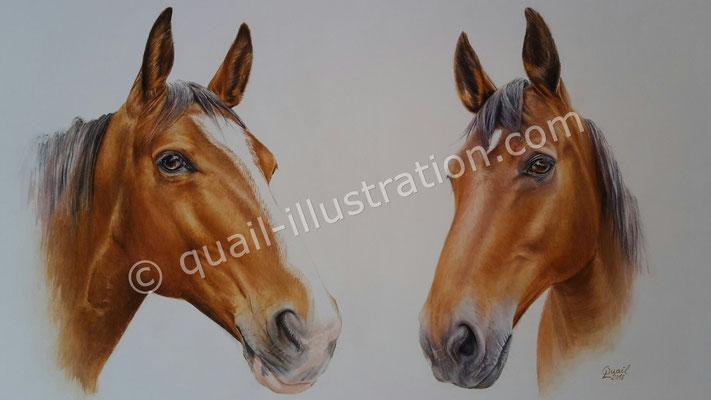 Portrait von 2 Pferde in Gouache