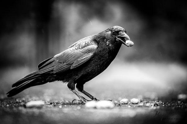 dark wings, dark words III