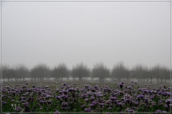 Der Herbst bringt den Nebel... Pt. II