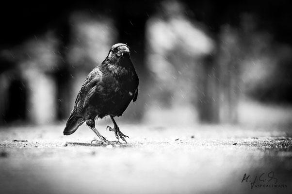 dark wings, dark words I