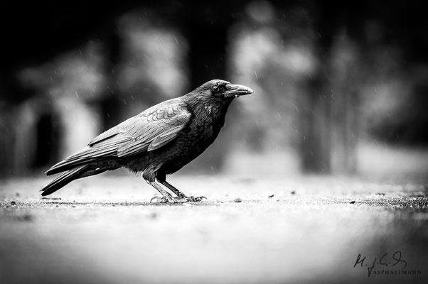 dark wings, dark words II