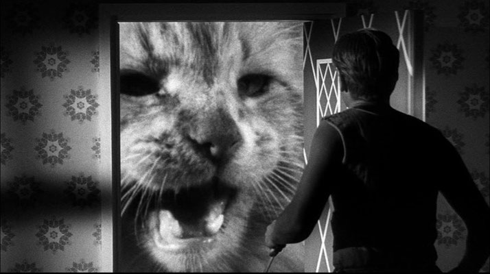 eine Bluescreen-Leinwand lässt die Katze vor der Tür monsterhaft riesig erscheinen