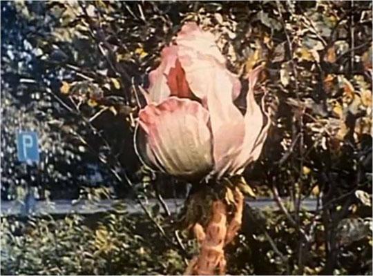 (ein Triffid, eine Pflanze mit tierischen Eigenschaften die aufgrund eines globalen Unglücks droht, die Menschheit auszurotten. Diese spannende Ausgangssituation des Romans wurde leider zu wenig genutzt, dennoch entstand ein spannender SciFi-Horror-Film