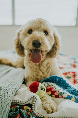 MRT für Hunde, CT für Hunde - Professionelles Magnet-Resonanz-Tomographie und Computertomographie für Ihren Hund, Ihre Katze - vetpix.at