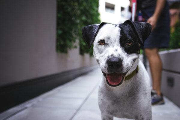 MRT für Hunde, CT für Hunde - Professionelles MRT und CT für Ihren Hund, Ihre Katze - vetpix.at