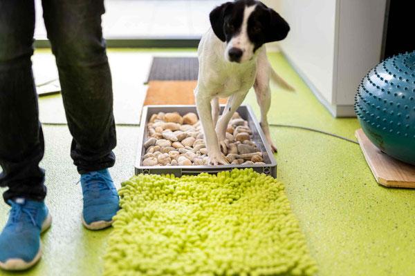 vetpix.at - MRT für Hunde und Kleintiere, CT für Hunde und Kleintiere - Ihr Tier in guten Händen - Laufanalyse bei Ihrem Hund - St. Moritz