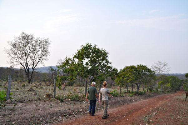 Pantanal Brasilien