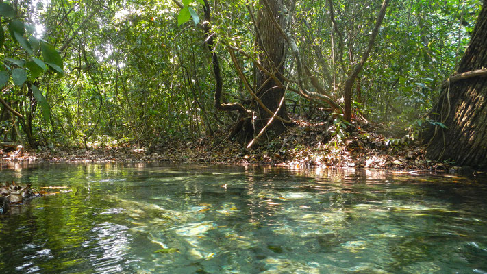 Fluss Schnorcheln Pantanal Brasilien