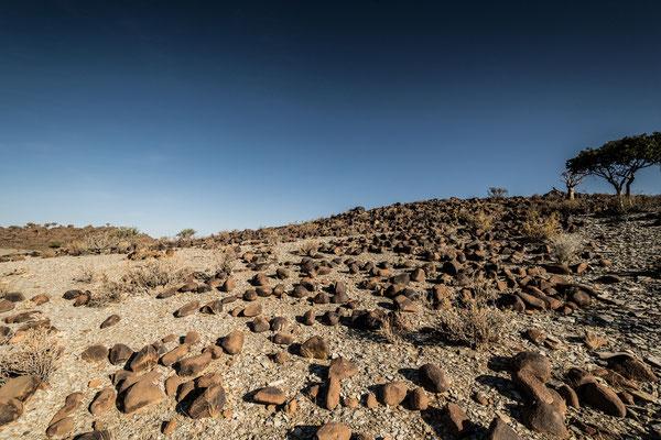 Köcherbaumwald Mesosaurus Camp Namibia