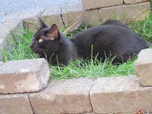 je kan ook heerlijk liggen op dat gras lekker koel als het warm is