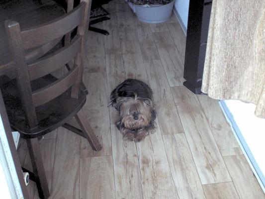 Chica een hondje uit het asiel was al 8 jaar maar gelukkig hebben wij nog 6 mooie jaren gehad  CHICA JE WAS EEN TOPPERTJE