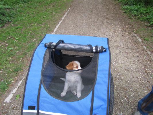 JA ik mag altijd mee ze hebben zelfs een honden car,  hoef ik niet te lopen en zie van alles