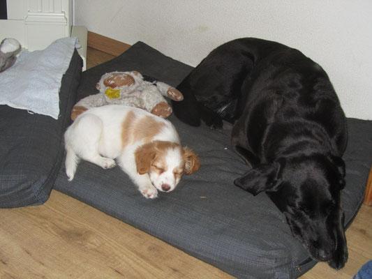 Jessie en ik liggen samen op het honden kussen