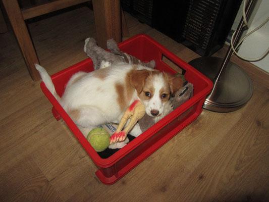 In de speelgoed box kan je dus ook liggen