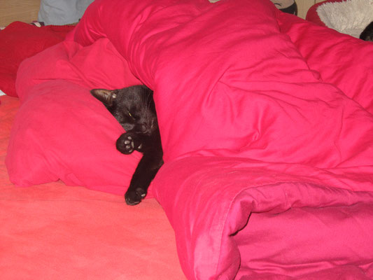 nou ik kruip wel in bed lekkker warm