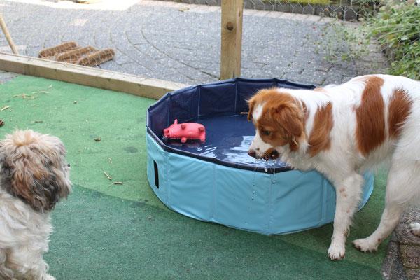 Maar we hebben ook thuis een eigen zwembadje om af te koelen als het heet is buiten