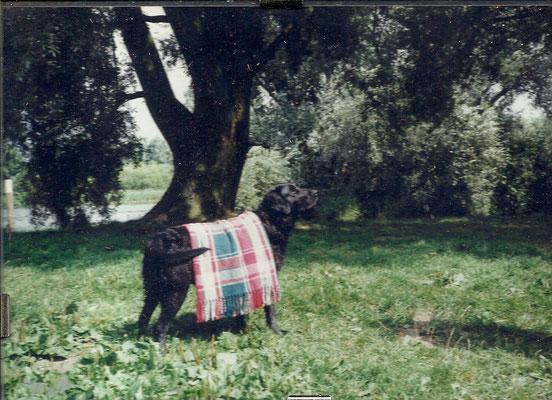 Bobo net uit het water met zijn 16 jaar was ze de oudste hond die Chiara gehad heeft