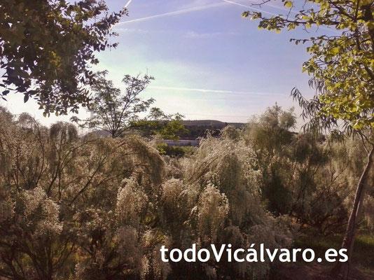 Senda botánica de Valdebernardo