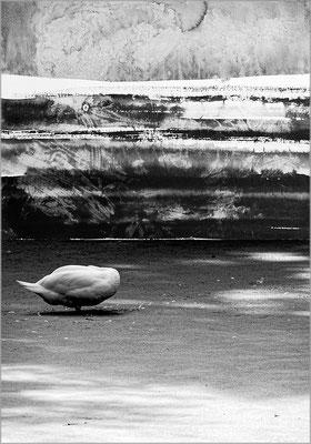 Fil de l'eau 44. Montage photographique, impression jet d'encre contrecollée sur dibond, 70 x 50 cm.
