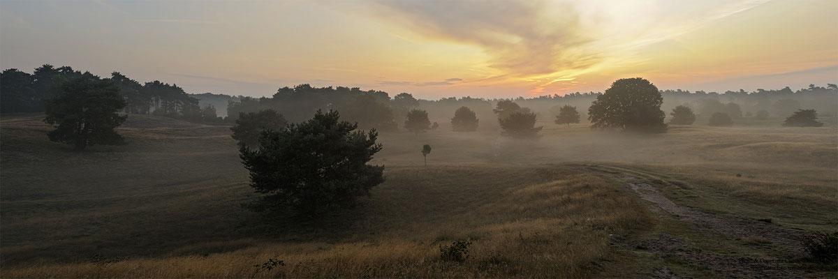 Westruper Heide (D)