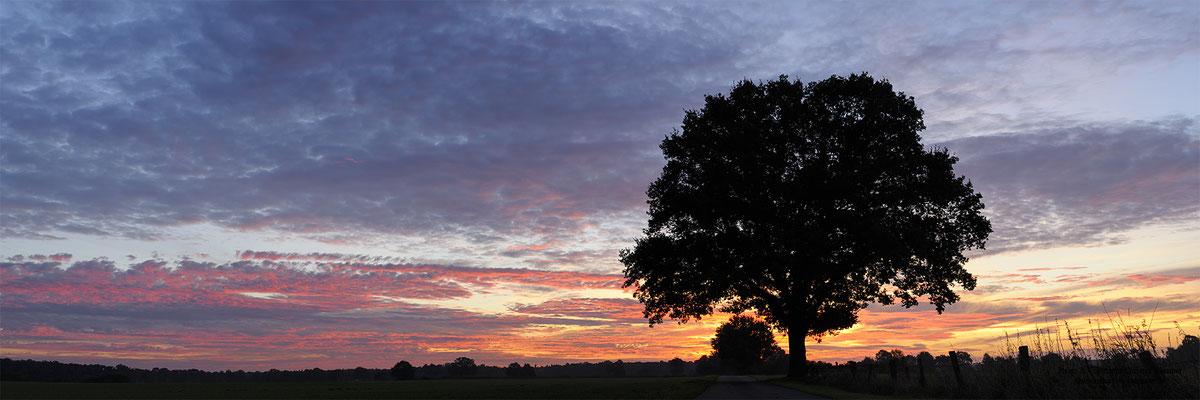 Baum bei Sonnenaufgang (D)
