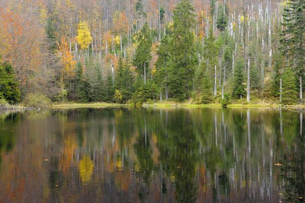 Herbstwald an der Martinsklause, NP Bayerischer Wald (D)