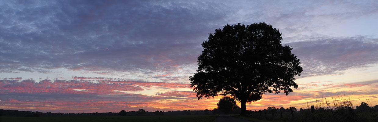 Einzelner Baum bei Sonnenaufgang