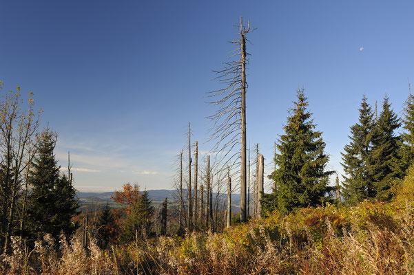 Wald unterhalb des Lusengipfels, NP Bayerischer Wald (D)