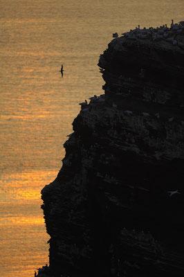 Vogelfelsen bei Sonnenuntergang