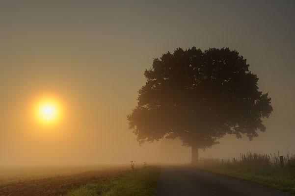 Bei Sonnenaufgang im Nebel