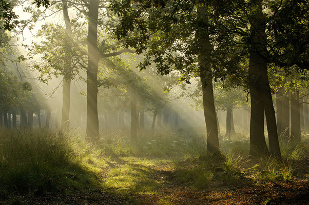 Sonnenstrahlen im Morgennebel (D)